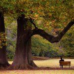 大木の下でベンチに座っている男性の画像